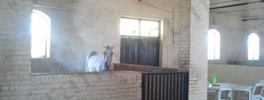 مهپاش اسب