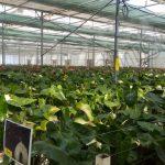 ۵ روش اصلی خنک کردن گلخانه