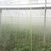 قیمت مه پاش گلخانه
