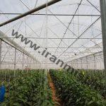 اجرای پروژه یک هکتاری گلخانه شرکت جهاد نصر اصفهان